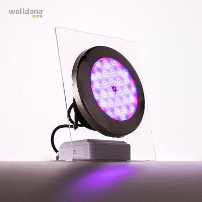 Moonlight LED-lampor (komplett med kablar och flänsar)